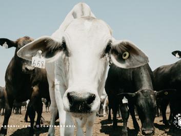 Confina Brasil visitou ícones da pecuária no Oeste da Bahia