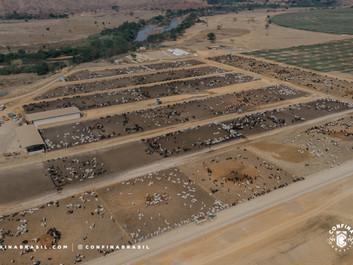 A beleza da pecuária em Minas Gerais, Espírito Santo e Rio de Janeiro