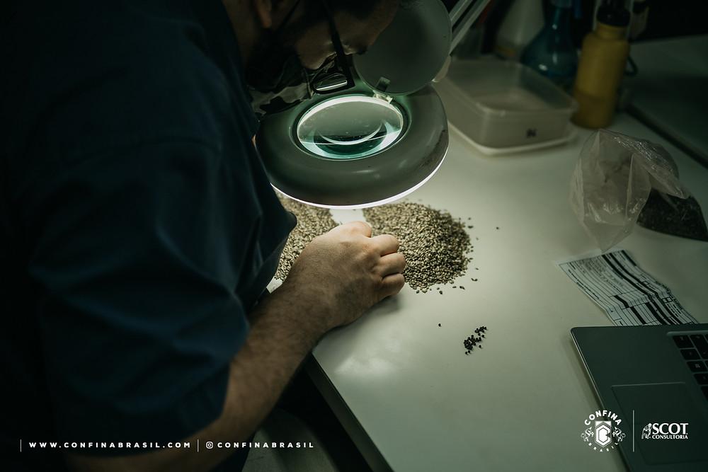 qualidade sementes barenbrug - confina brasil
