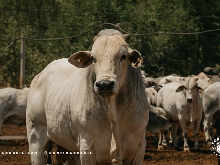 Oeste da Bahia é forte na produção de carne de qualidade