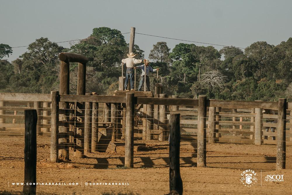 pecuaristas no confina brasil