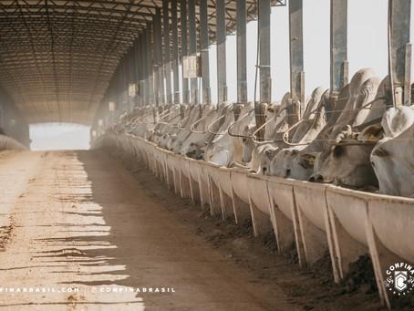 Cuidado com bem-estar animal e uso de tecnologias na pecuária do Pará