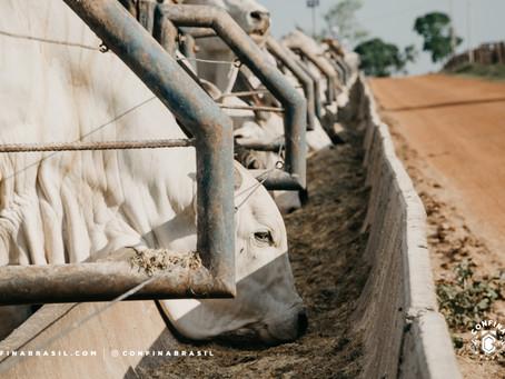 Em Tocantins, confinamento é estratégia de gestão da fazenda