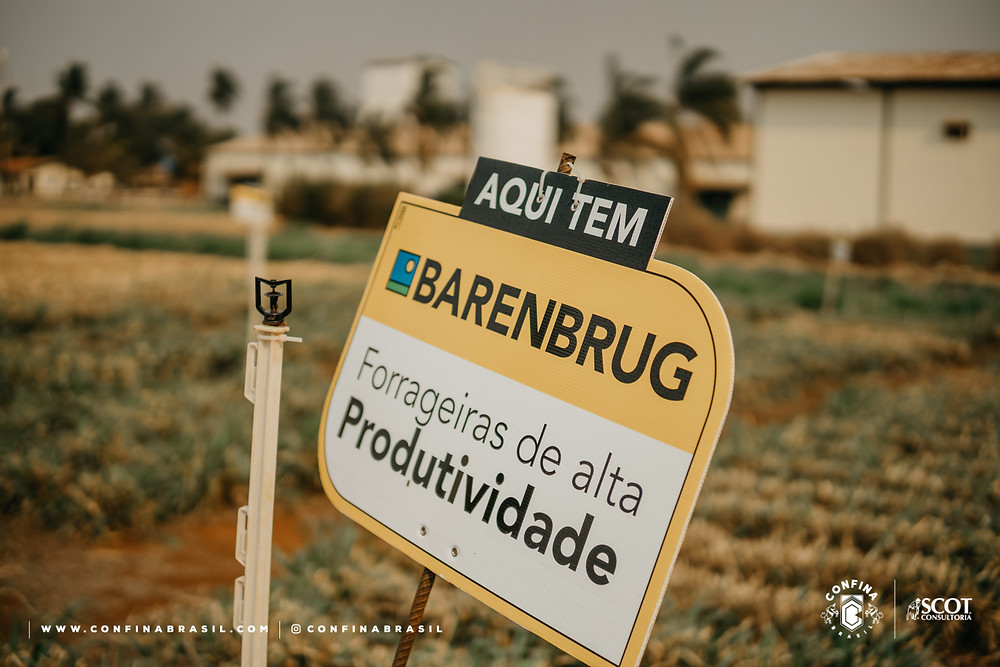 forrageiras da barenbrug visitadas pelo confina brasil