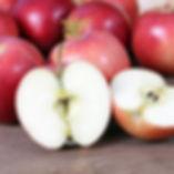Gala apple square.jpg