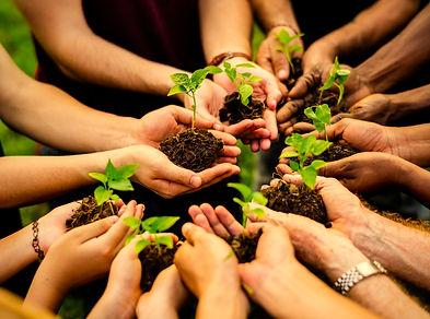 group-volunteers-planting-new-trees.jpg