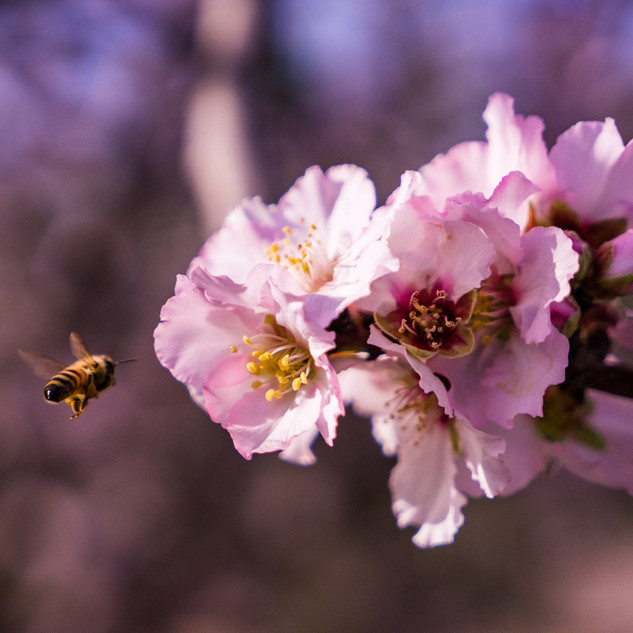 Make some honey from stinging