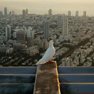 Peace on Tel aviv city by Shay Meir