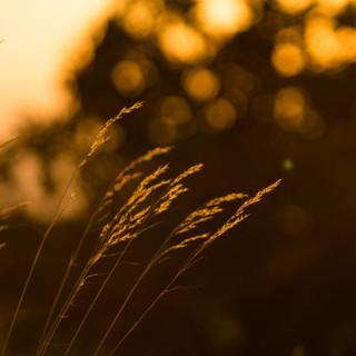 Gentle light 2