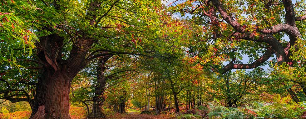Autumnal Wonderland