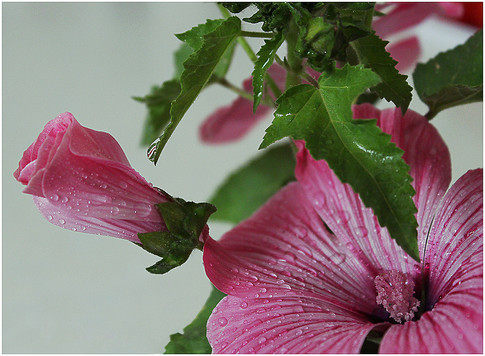 Blooming Wet