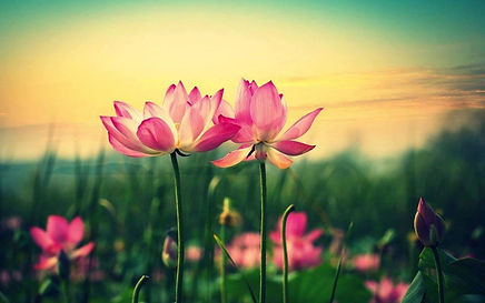 Meditazione Viterbo, Kriya yoga, Paramahansa Yogananda, Ritiro spirituale