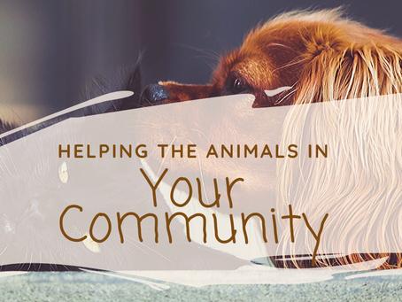 Feeding The Animals of CVHS