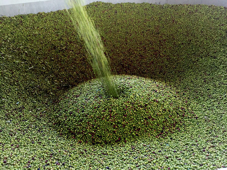 How olive oil is made?