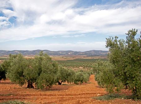 Almazara De Alcaraz, Premium Organic Extra Virgin Olive Oil