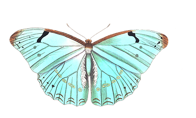 butterfly-1525824_1920.png