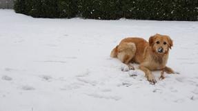 Malu im Schnee im Garten nach dem Toben