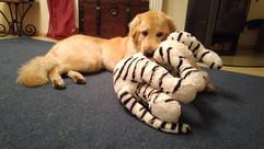 Malu mit ihrem Tiger