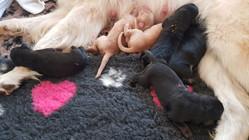 An der Milchbar 1. Tag nach der Geburt - Hovis vom Hause Tara