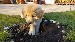 Malu mit 2,5 Monaten bei der Gartenumgestaltung