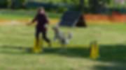 Marion und Malu auf dem Hundeplatz beim Springen über Hürden