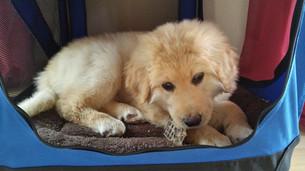Malu mit 3 Monaten in ihrer Box