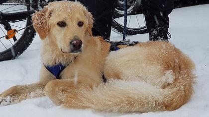 Malu wartet, dass die Schnee-Radtour endlich losgeht.