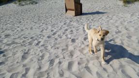 Malu mit 5 Monaten am Ostseestrand