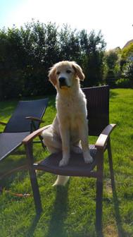 Malu mit 6 Monaten auf dem Gartenstuhl