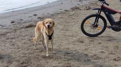 Malu am Strand entlang des Rheins bei einer Radtour