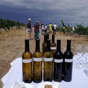 Sommelier | Teresa Gomes | The Wine Flat | Tours