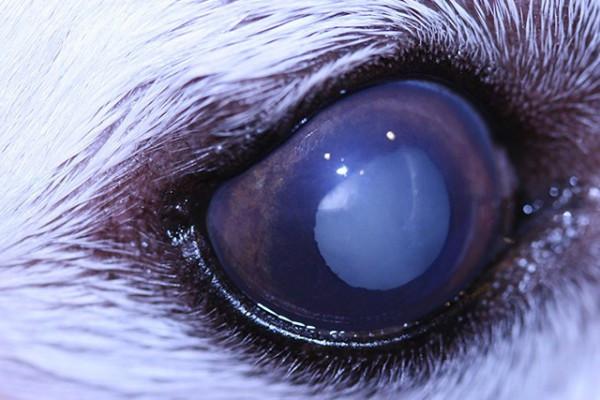 Husky Health
