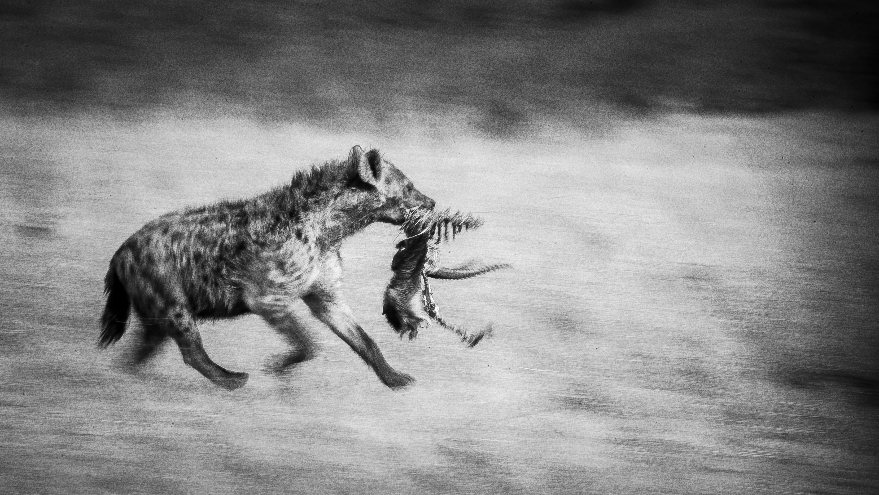 Hyena Pan