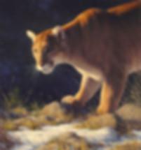CougarsGaze.jpg