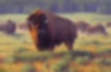 YellowstonePrime.jpg