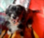 Animal Communication dogs
