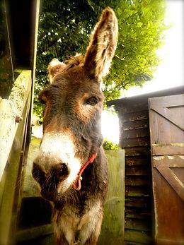 Donkey sanctuary UK, donkey, talk with animals