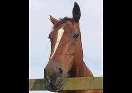 Animal communication horses