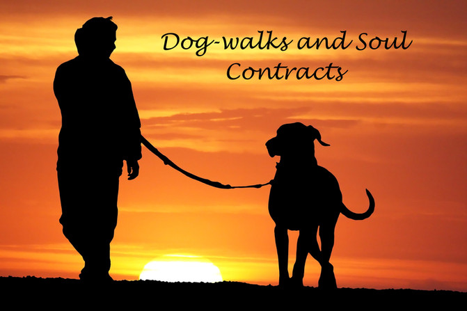 Dog Walks and Soul Contracts