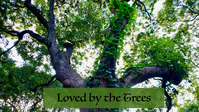 Loved by the Trees