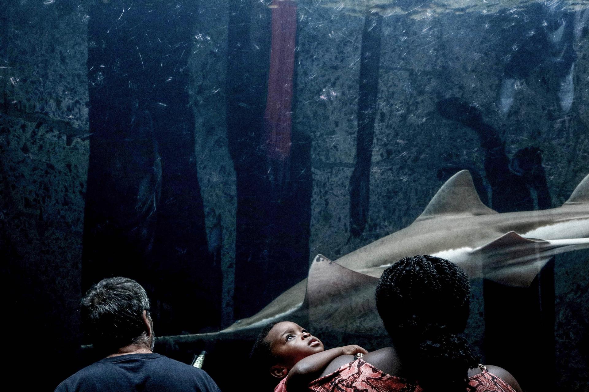 dallas aquarium-2.jpg