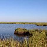 Chesapeake2.jpg
