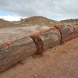 Petrified Forest (115).jpg