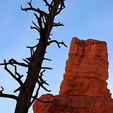 Red Canyon (23).JPG