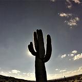 Saguaro 1.png
