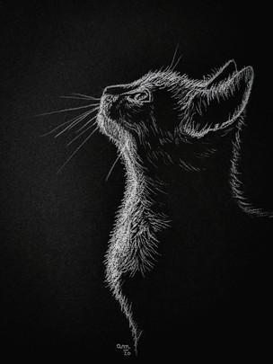 Chat en clair-obscur