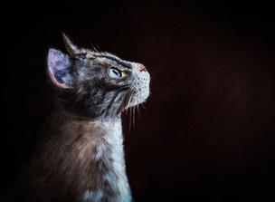 Portrait de chat à l'huile