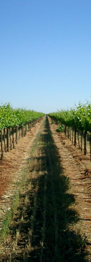 Cranswick Wines