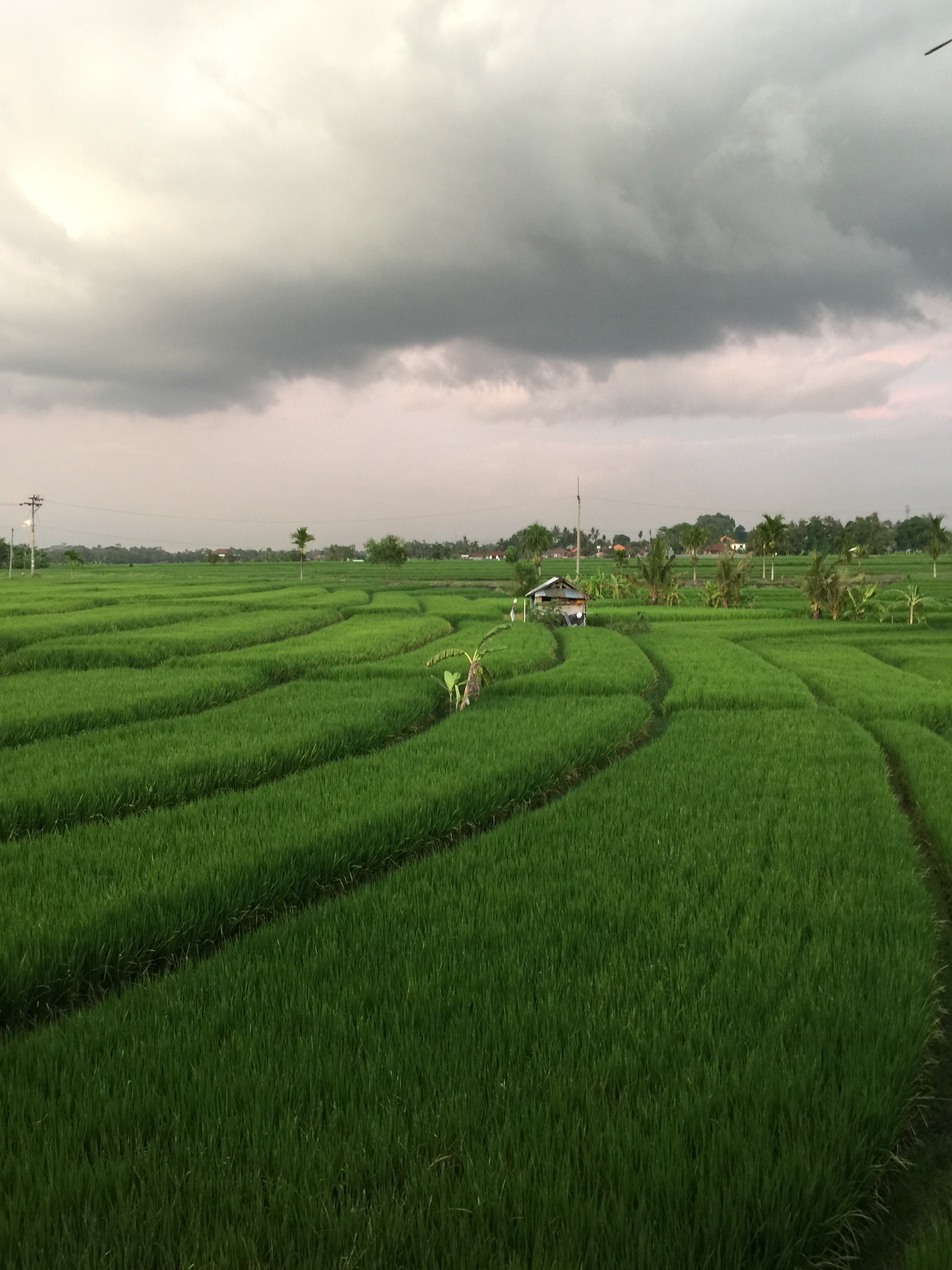Rice Paddy Views
