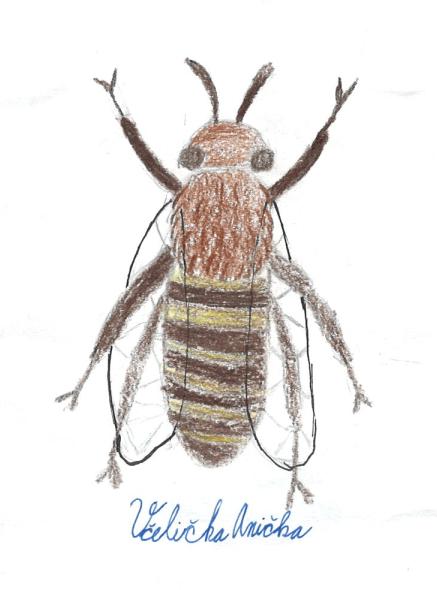 Včelička Anička
